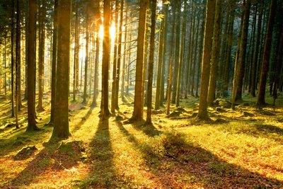 Aura (Аура) — программа звуки природы, звуки леса.